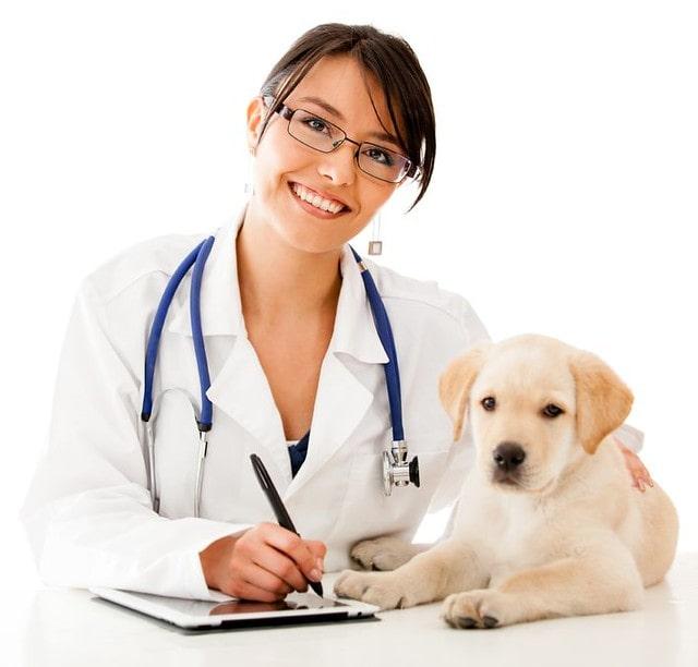Dog Good Health