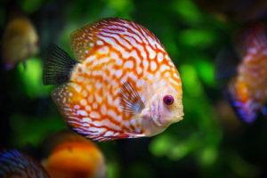 Aquarium Pet
