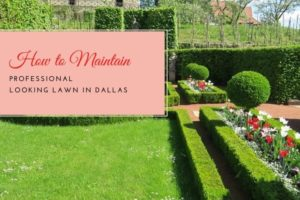 Lawn In Dallas