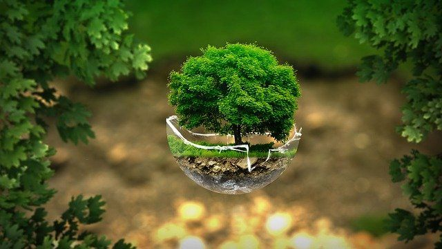 Eco-Warrior Trends That Are Here To Stay